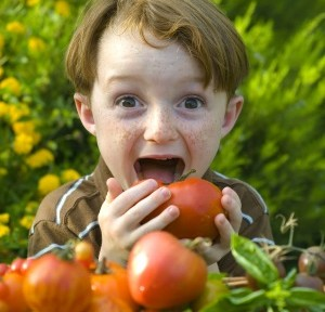 Cropped - Boy eating tomato iStock_000004399118Large