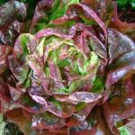 Food - Loose Leaf Lettuce3