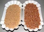 Food - amaranth grain