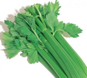 Food - celery1
