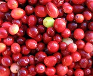 Food - cranberry