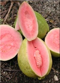 Food - guava