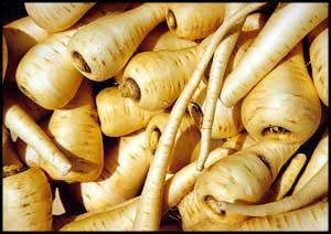Food - parsnip