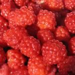 Food - raspberry