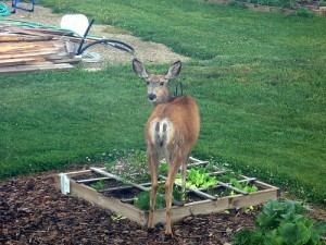 SG - Deer in the garden - Copy