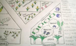 SG - Garden planning - Copy