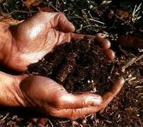 SG - Healthy Soil