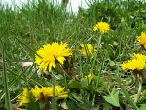 SG - weeds3