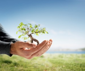 donate - tree in hand iStock_000004633733XSmall