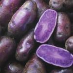 Food purple potato2