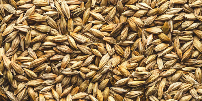 Is barley a good grain option to help prevent diabetes?