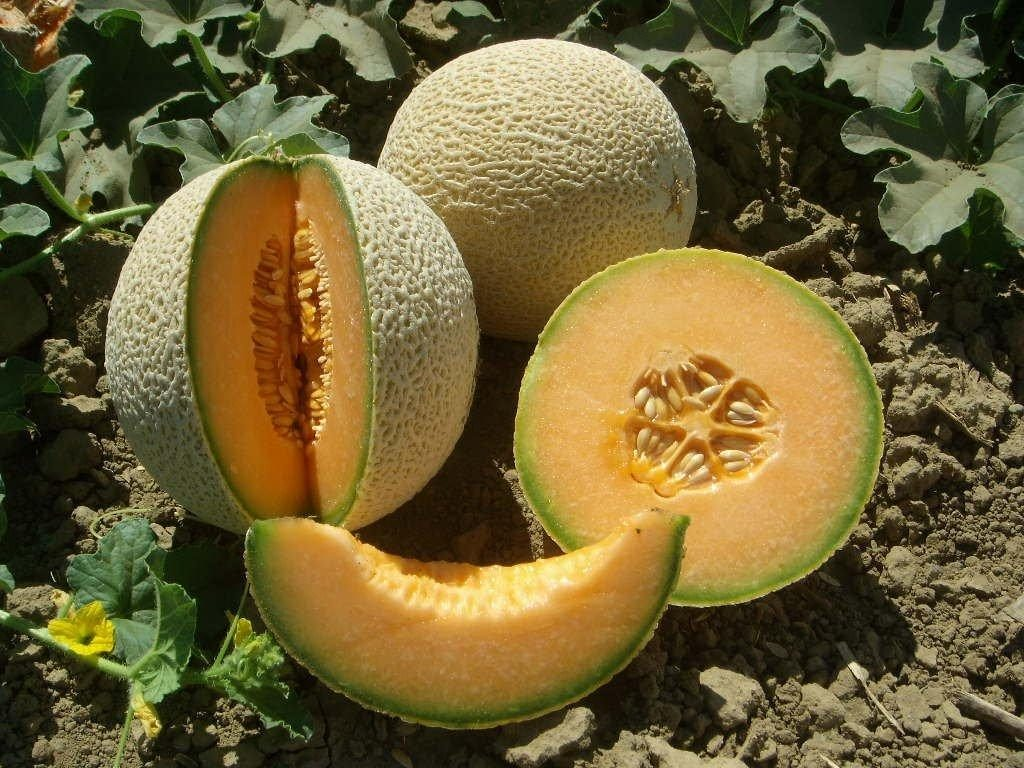Cantaloupe. Are they good for diabetics?