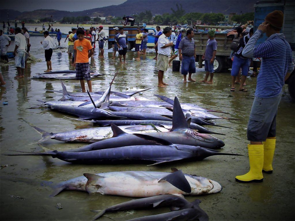 Unsustainable fishing practices