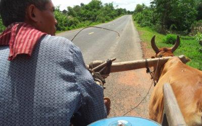 Oxen Driven Cart
